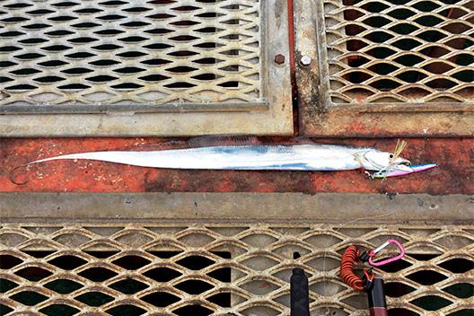 久しぶりの須磨海釣り公園、ジグでタチウオ釣れた。